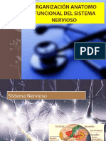 Organización Anatomo-Funcional Sistema Nervioso