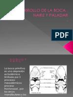 DESARROLLO DE LA BOCA , NARIZ Y PALADAR.pptx