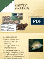 Metabolismo en Peces y Vertebrados Superiores Expo