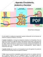 Tema 3_Aparato Circulatorio, Respiratorio y Excretor.ppt