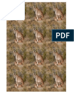 Imprimir Puma