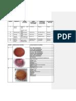 Organismos-coliformes-totales-y-fecales.docx