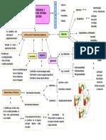 Anatomía Funcional y Biomecánica Del Sistema Masticatorio