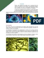 Los virus, las bacterias y los hongos.