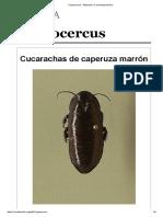 Cryptocercus - Wikipedia, La Enciclopedia Libre