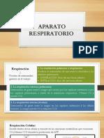 Trabajo Grupal Sistema Respiratorio