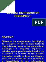 Sistema Rep. Femenino 1 (1)