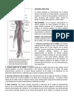 Resumen de La Arteria Poplitea