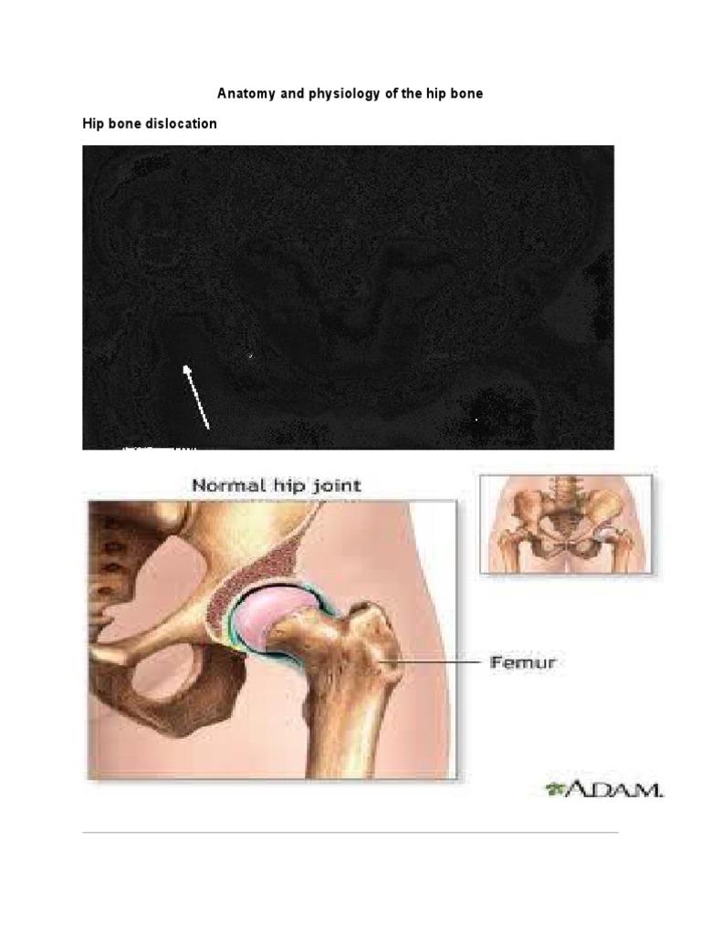Anatomy and Physiology of the Hip Bone | Hip | Lower Limb Anatomy