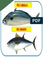 DIBUJO PEZ.docx