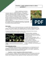 10115-Petite_Aubérie_2010__flétrissement_bactérien___quelles_méthode_de_lutte_en_culture_maraîchère (1).pdf