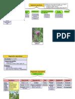 UD1 MC Vegetacion Espontanea