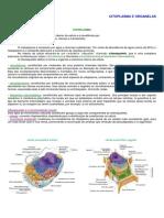 1ano_citoplasma_organelas.pdf