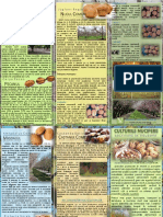 fisa-tehnologica-culturi-nucifere.pdf