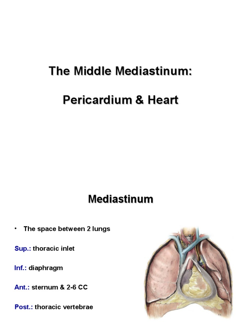 Anatomy, Lecture 6, Pericardium and the Heart (slides)