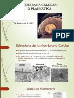 M. Plasmatica