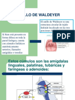 Anillo de Waldeyer