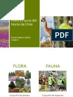 Flora y Fauna Del Norte de Chile