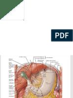 Anatomy Netter