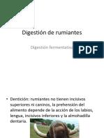 Fisiologia Sistema Digestivo de Rumiantes