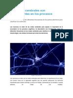 Las Ondas Cerebrales Son Determinantes en Los Procesos Cognitivos