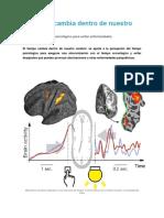 El Tiempo Cambia Dentro de Nuestro Cerebro
