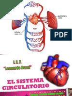 El sistema circulatorio.pptx