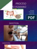 1Proceso digestivo humano.pptx