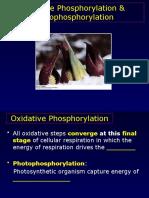 Chapter 19 Oxidative Phosphorylation Posted