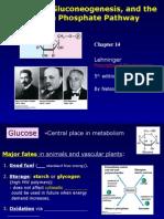 3. CH 14 Glycolysis