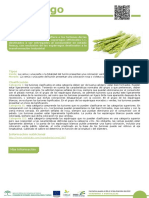 10_Esparrago.pdf