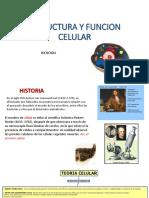 estructura y funcion celular iv