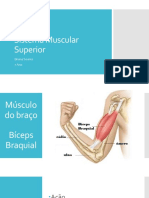introdução ao sistema muscular superior 7 ano
