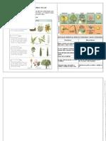 Clasificación Taxonómica de Las Plantas