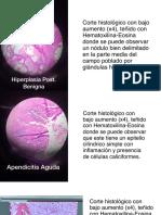 Cortes Patologia - Primer Parcial.pdf