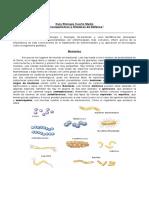 Prueba Adn y Cromosomas 2do Medio