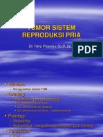 Tumor Sistem Reproduksi Pria