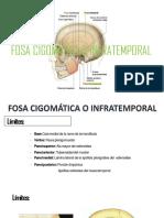 FOSA CIGOMATICA
