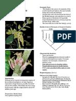 Fagaceae Inglés