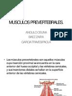 5-musculosprevertebrales SEMINARIO
