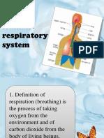Human Respiratory System II