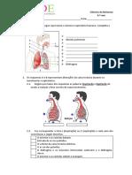 6.º Ano. Sistema Respiratório Humano e Peixes