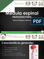 18-médula-espinal
