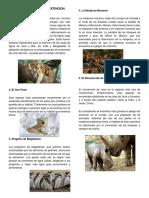 5 Animales en Peligro de Extincion