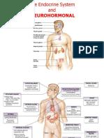 dr tomy_Anatomi organ endokrin.ppt