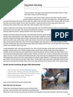Usaha_ternak_kambing_jawa_kacang.pdf