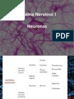 Unidad 2-3 Sistema Nervioso.pdf