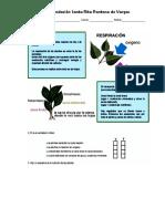 respiracion plantas