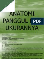 47976367-ANATOMI-PANGGUL-DAN-UKURANNYA.ppt