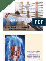 Anatomía Abdominal. Origen, Inserción y Acciones